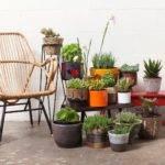 Amsterdam Modern Organic Home Accessories Cacti