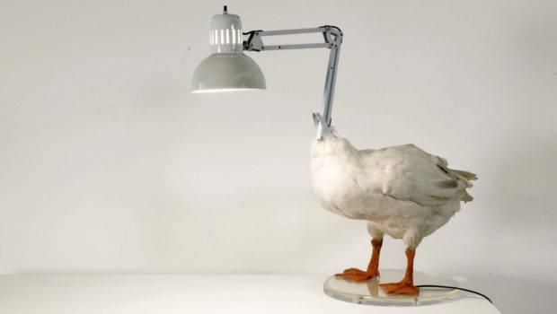 Art Glass World Looks Like Animals Unusual Animal Shaped Furniture