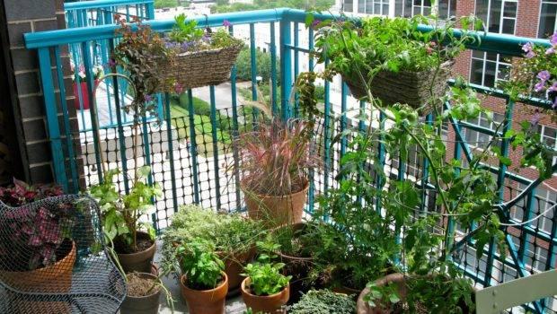 Balcony Garden Growing Herbs Food