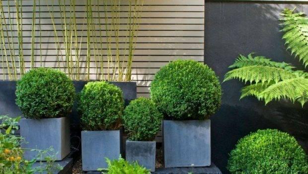 Bamboo Garden Design Ideas Small