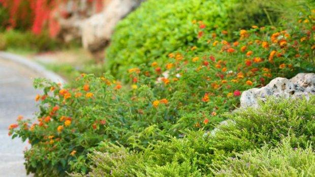 Budget Landscaping Tips Bargainbriana