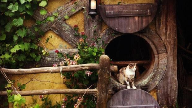Cat Hobbiton New Zealand Traveling Cats Travel