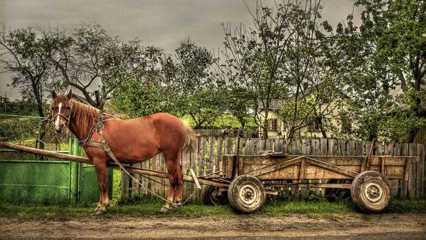 Country Photograph Life Evelina Kremsdorf