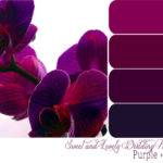 Courtesy Sweet Lovely Life Purples Pretty Colors