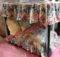 Custom Floral Canopy Pet Bed Dog Beds Pinterest