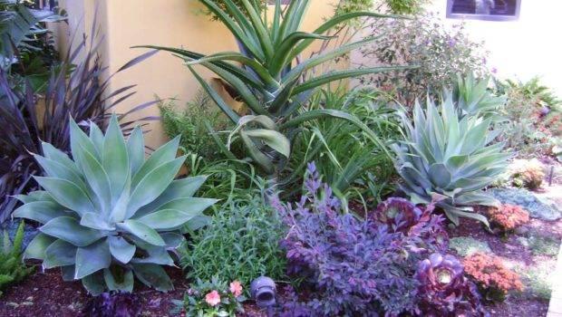 Drought Resistant Landscape Sustainable Home Ideas