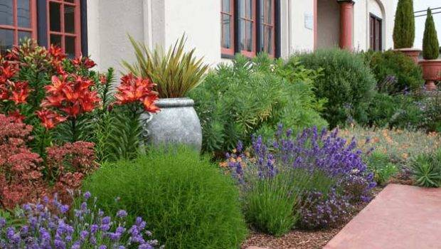 Drought Tolerant Plant Ideas Your Homestead