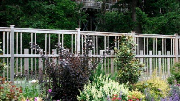 Eco Friendly Garden Fences Ideas Blooming Lavender Beautiful Rosebud
