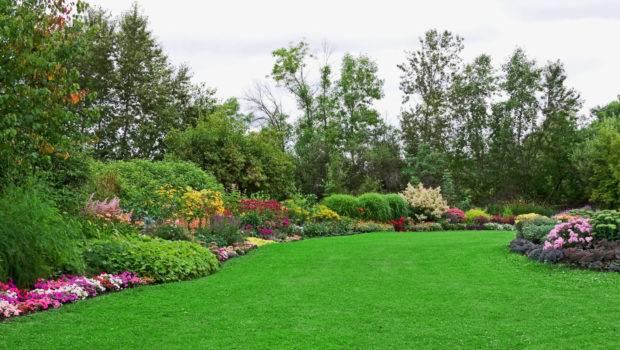 Expert Gardening Tips July Roses Perennials Lawn