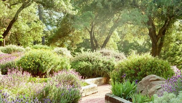 Front Yard Backyard Landscaping Ideas