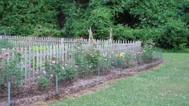 Garden Fence Ideas Homes Vegetable