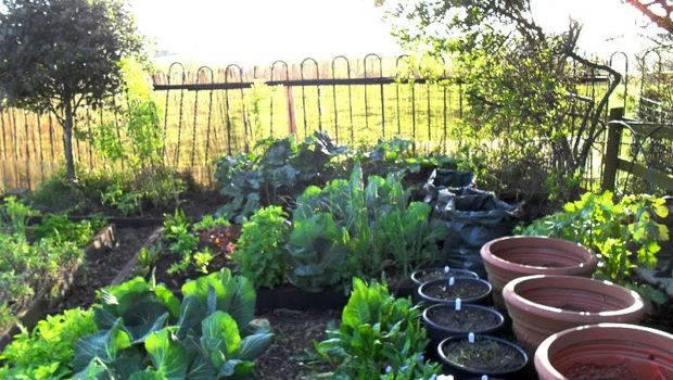Ideas Gardening Budget Lovely Greens