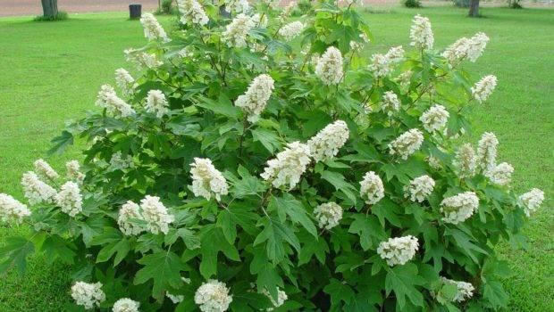Importance Native Plants Your Landscape