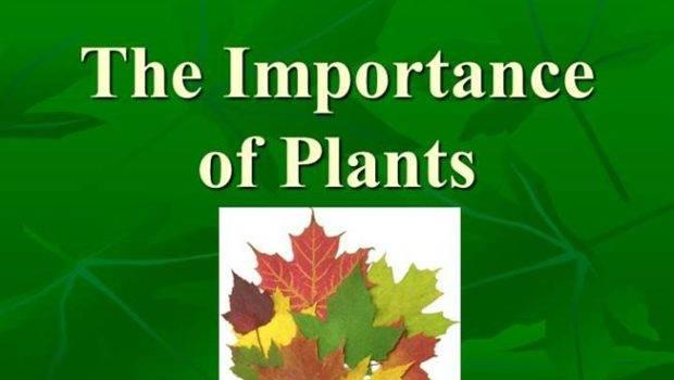 Importance Plants Authorstream