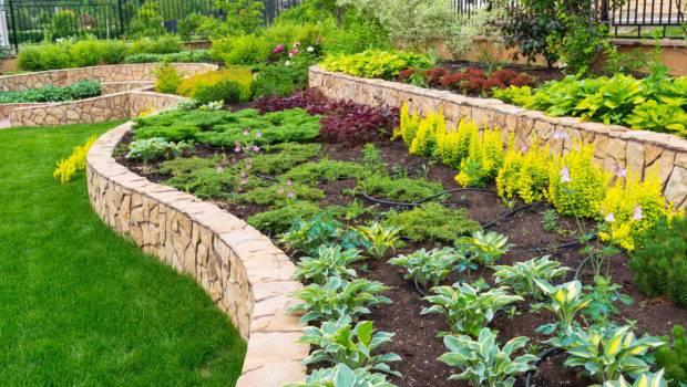 Inspirations Succulent Plants Arizona Drought Resistant