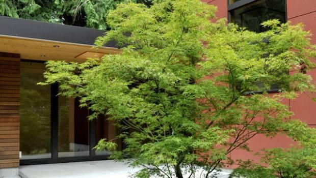 Japanese Garden Design Ideas Gardenso