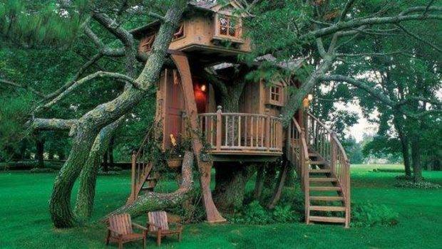 One Kicken Tree House Want Have All Picked