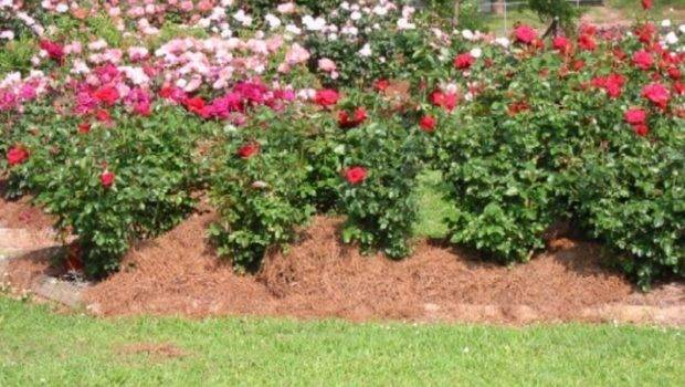Plans Photograph Rose Garden Ideas
