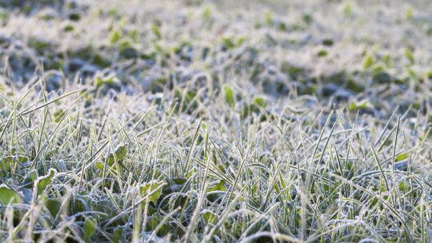 Prepare Your Lawn Winter Landscapeq