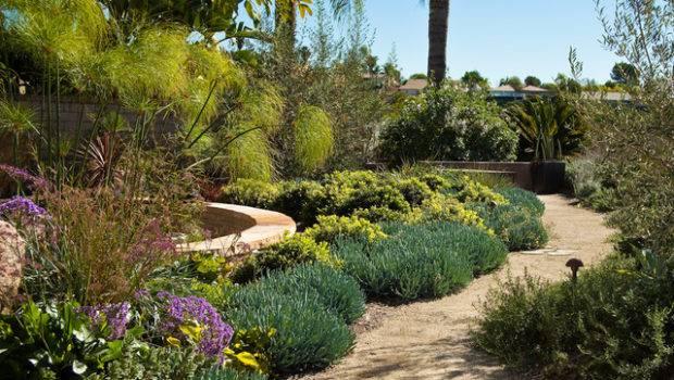 San Diego Drought Tolerant Landscape