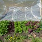 Shelter Growth Hoop House Gardening Druid Garden