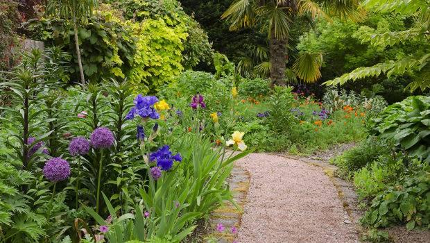 Side Pathway Garden Bearded Irises Alliums Scilla