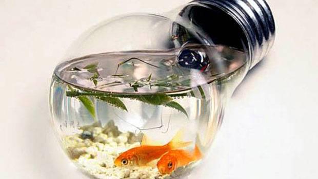 Simply Creative Fish Bowls