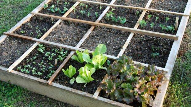 Square Foot Gardening Prepper Resources Ultimate