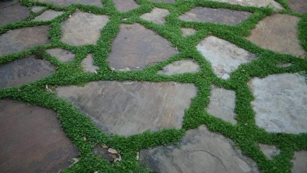 Texas Gardening Ground Cover Between Flat Rocks Darkmoondreamer