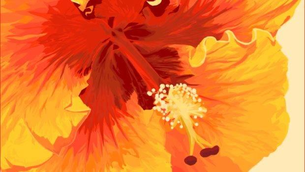 Used Red Orange Create Analogous Color Harmony