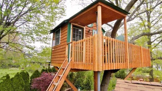 Whoa Can Rent Sweet Tree House Airbnb Steve Aoki