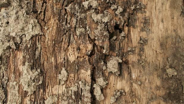Wood Textures Tree Bark