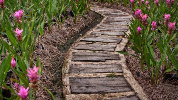 Wooden Path Blaize Photography Tips Tricks Blog