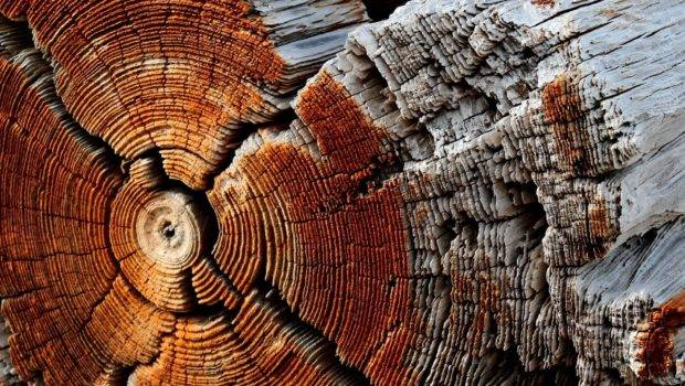Wooden Surface Wood Texture Pattern Trees Circle Dry Dead